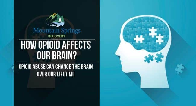 how opioids affect the brain